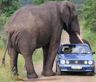 Elephant-car-404a_670724c